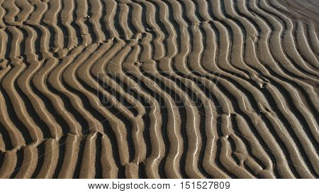 African zebra pattern in the sand abstract background