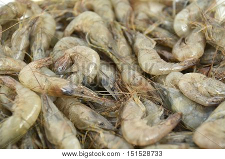 Fresh live just caught Black Sea shrimp, closeup