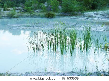 Outdoor pond with reed