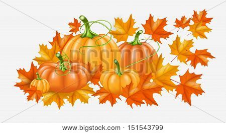 Autumn yellow, orange Pumpkins and Bright fall leaves. Vector illustration for poster, card, label. Thanksgiving Day background.