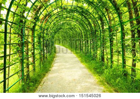 Green tunnel in fresh spring foliage. Way to nature. Natural background from beautiful garden.