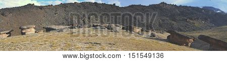 Stone Mushrooms, Nature