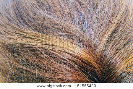 Brown hair woman laid in a ponytail.