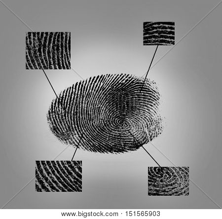 Fingerprint on gray background. Individuality concept.