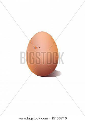 Cracked egg shell
