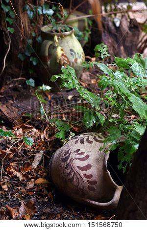 Abandoned Vintage Ceramic Jug Pottery