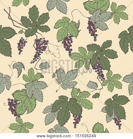 Color grapevine seamless pattern based on hand drawn sketch. Great for wineries, grocery stores, aromatherapy, wine label design.