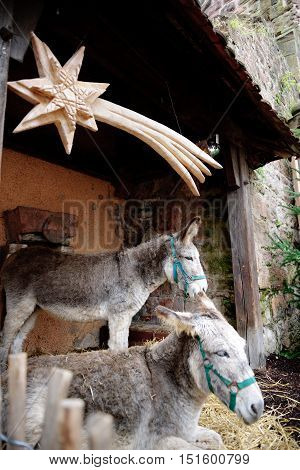 Two donkeys with star above them in farm stable