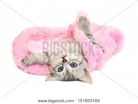 Little Kitten in a Pink Fur Coat on a white background