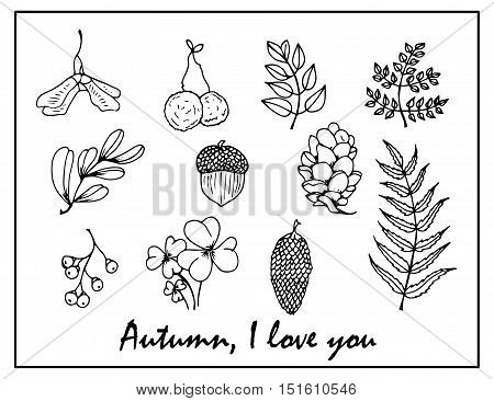 Nature Illustration. Natural Materials. Forest Postcard. Forest Fruits, Leaves, Branches.