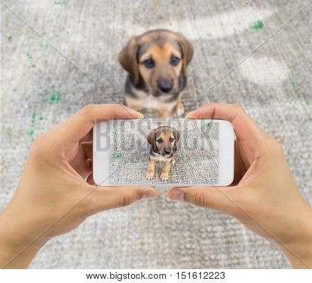 man taking a picture of a stray dog