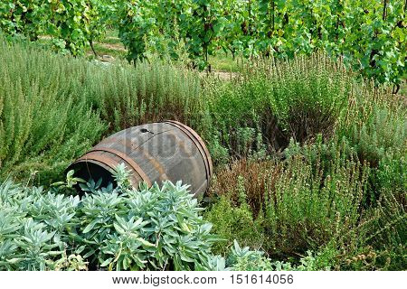 Old dry wine cask on a historic vineyard in Prague.