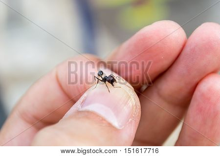 Man capturing an ant with his fingers