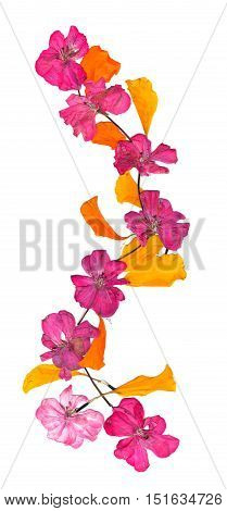 Isolated Wave Line Pink Geranium, Collection Of Elements Application Of Dried Pressing Bright Flower