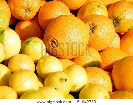 The lemons and oranges on bazaar in Tel Aviv IsraelJanuary 12 2011
