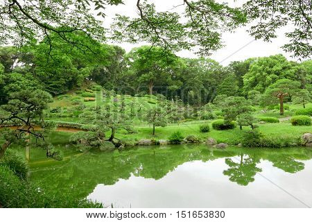Green Plant, Tree And Lake In Japanese Zen Garden