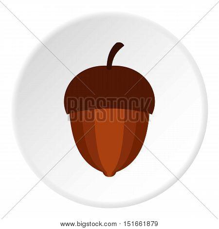 Acorn icon. Flat illustration of acorn vector icon for web