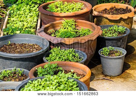 Vegetable pots with plants and seeds ,planting ,gardening