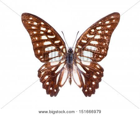 Beautiful colorful butterfly. Moth isolated on white.