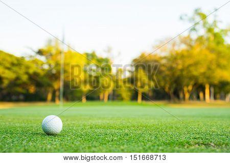 a white golf ball in a green grass