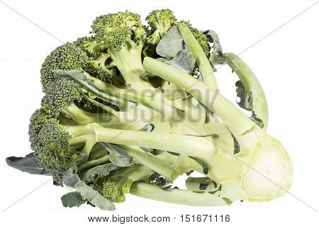 Single fresh green broccoli ( Brassica oleracea) isolated on white background