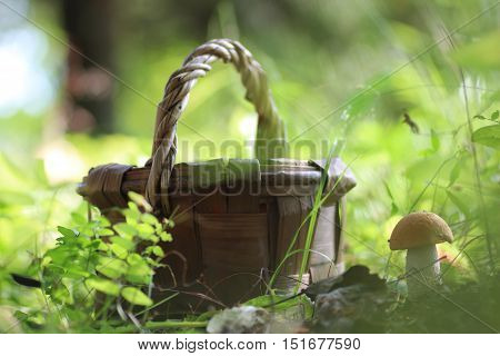 edible red hat mushroom and brown basket outdoor