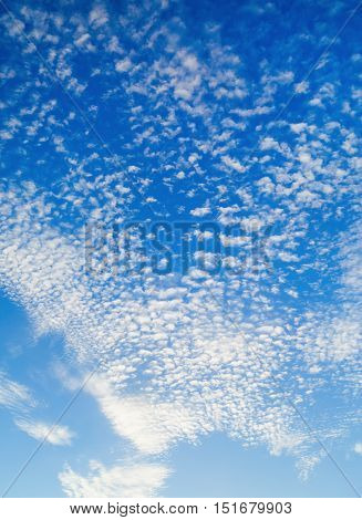 Blue sky with many small fluffy white clouds. Sky with clouds background. Vertical shot.