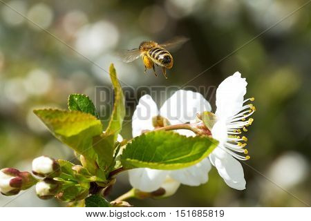 Bees On Flowers Apple 9