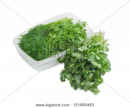 Bundles of dill coriander and parsley on a light background
