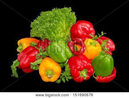Several fresh green yellow and red bell peppers and chili with twigs of the parsley cilantro lettuce on a dark background