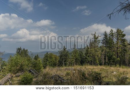 Forest near Vyssi Brod town in south Bohemia
