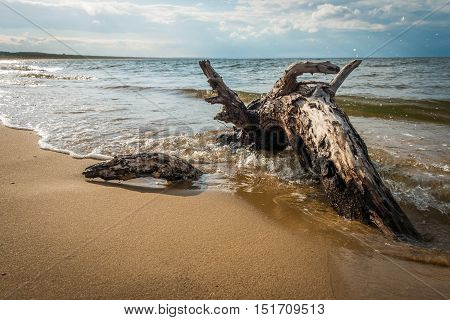 Big branch, partially buried in a sand, is lying on the shore and the waves are circumnavigating and crashing