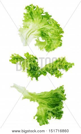Collection of Lettuce salad isolated on white background