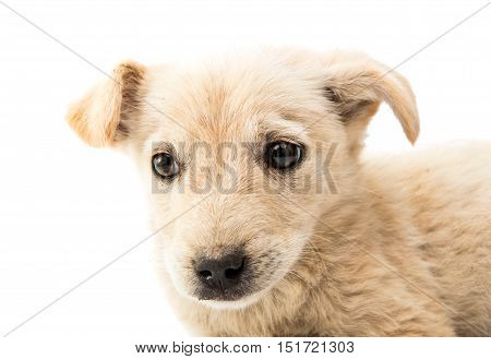 homeless puppy  dog on a white background