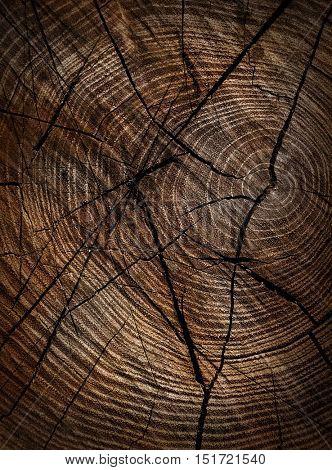 Wood texture closeup background.