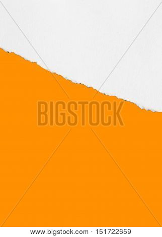 Torn paper, isolated background with Copy space