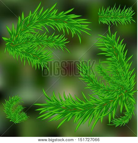 Christmas tree. Green blurred background. Twigs. Vector illustration