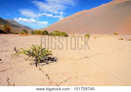 Low angle view onto a bush growing out of a crack in a very dry desert like ground between brown hills in Chile, South America