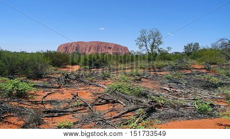 In the background, Ayers Rock, also known as Uluru, is a huge rock sandstone located in the Northern Territory, Australia. It is a sacred place for the indigenous peoples. It is ranked on the list of UNESCO World Heritage. In the foreground, View of the p