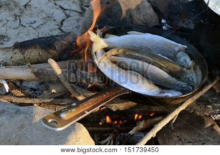 fish is fried on a frying pan cooking outdoors tourist's breakfast