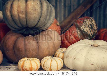 Variety of pumpkins for sale, pumpkin patch