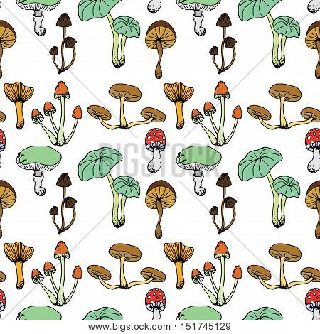 Nature Illustration. Natural Materials. Forest Postcard. Assorted Mushrooms. Edible And Poisonous Mu