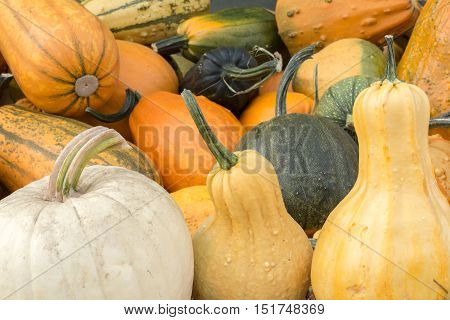 Variety of Pumpkin and Squash on a Pumpkin Patch stand in Northern California