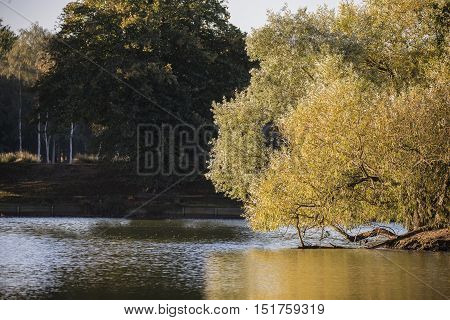 Beautiful Colorful Landscape Image Of Golden Autumn Fall Trees Reflected In Calm Lake