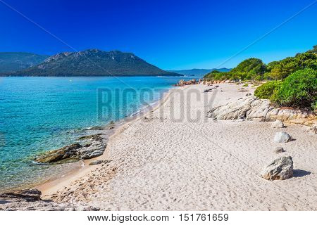 Green pine trees on sandy San Ciprianu beach with red rocks and tourquise clear water near Porto-Vecchio Corsica France Europe.