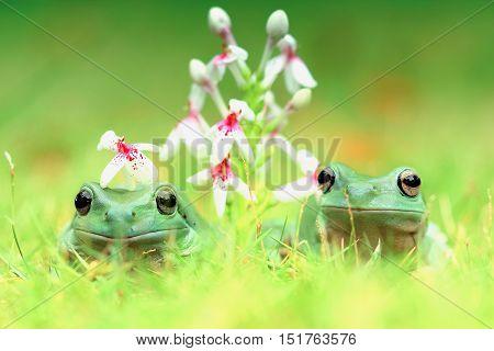 Dumpy frog, dumpy frog as the bridal couple
