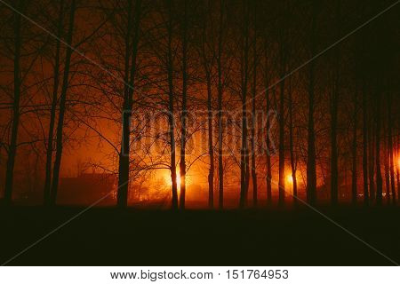 Gloomy autumnal desolate park in the fog at night