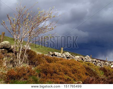 Thunderclouds build over a Scottish moor in spring.