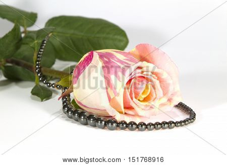 Bud of a gentle rose and hematite beads on a white background