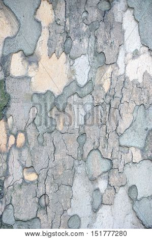 Shot of sycamore wooden textured background close up